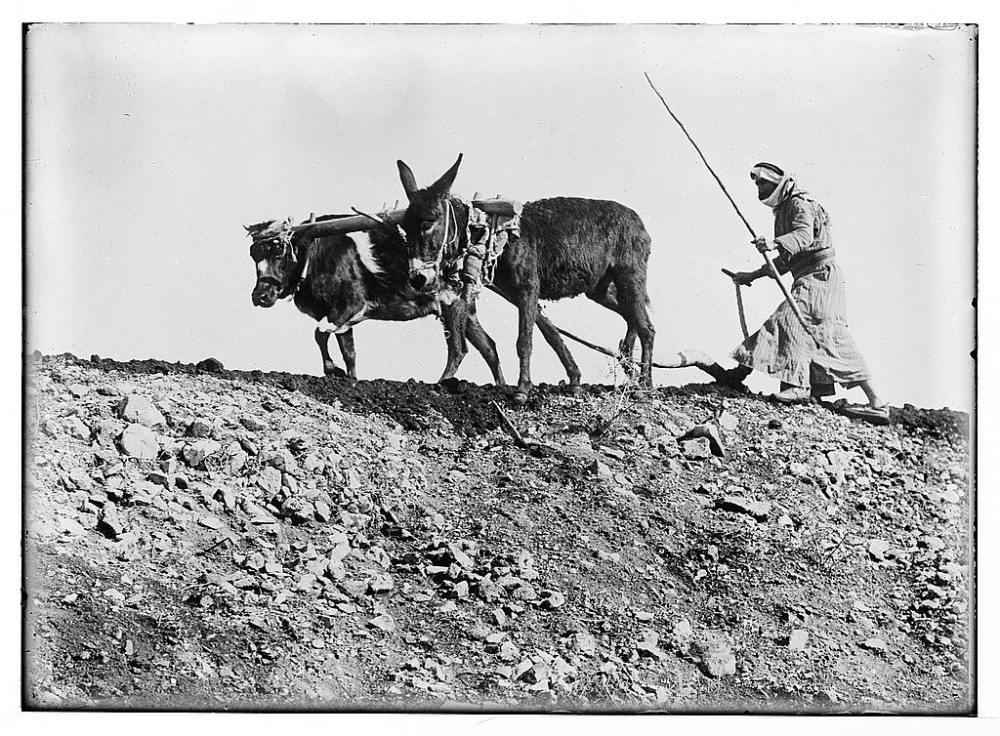 arab-plowing