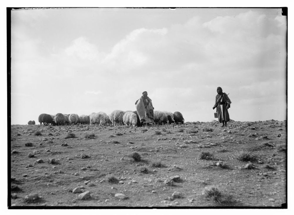 sheep-and-shepherds